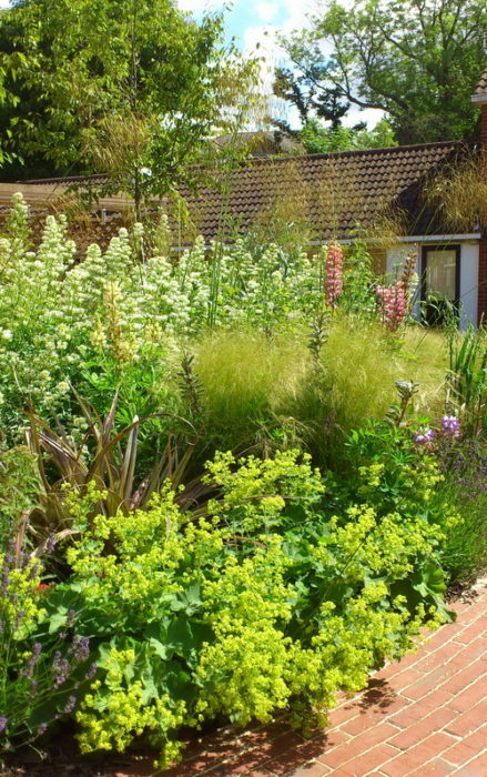 Care home garden planting ideas