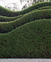 Urban garden Hedges cut into waves
