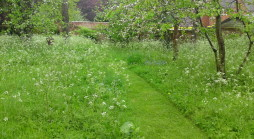 Garden design West London using meadows and orchards