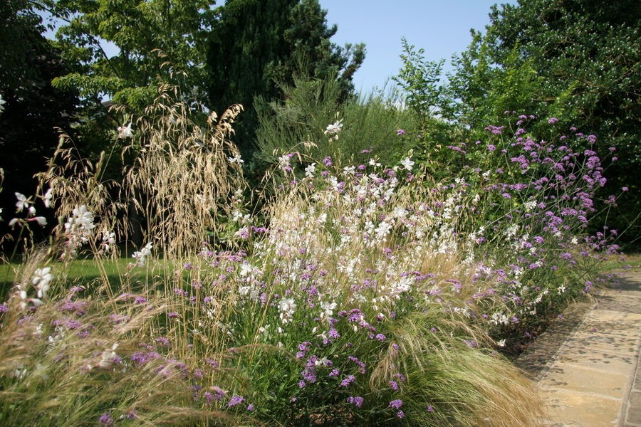 Planting advice with Gaura, Verbena and grasses