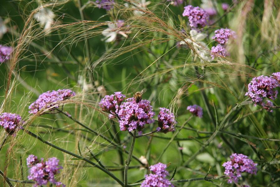 Ickenham Garden - Planting advice