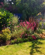 Garden Planting advice