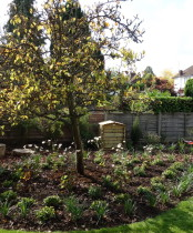 Garden planting advice for Woodland area