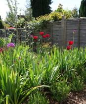 Garden planting advice - Spring