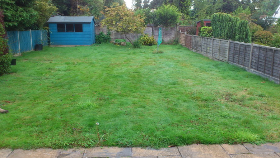 Ickenham garden needs planting advice