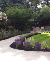 Verbenas, Veronica, Lavender, Lupins, Roses and Cottage garden planting add colour and interest to this Pinner Garden