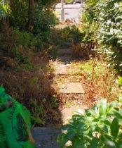 An overgrown front garden in Ickenham needing Rhoda Maw's help