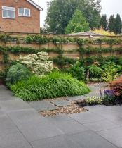 Trained Pyracantha on Fence in Modern Garden in Ruislip