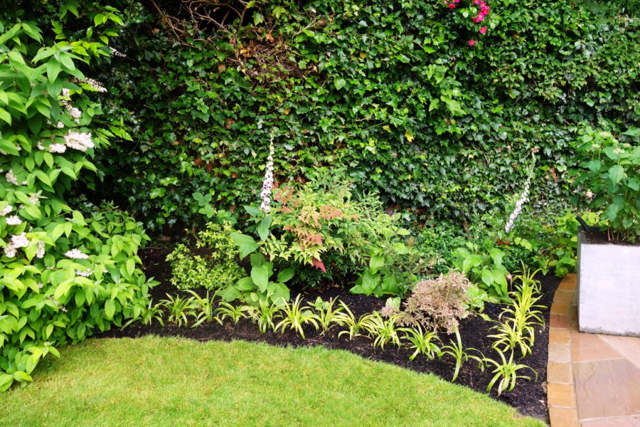 Garden planting design, Harrow. Small border in a garden in Pinner is transformed with colourful evergreens with different leaf shapes