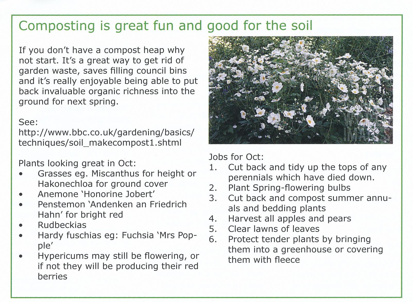 Garden jobs for October