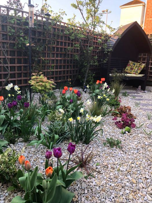 Small back garden with Spring Bulbs