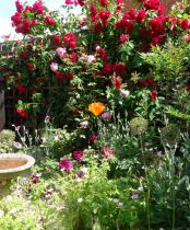 small back garden redesign - Cottage garden, with roses, seating a bird bath and many plants for wildlife