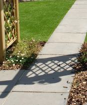 cottage garden planting and shadows