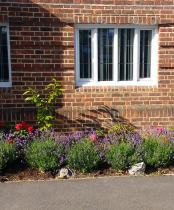 Community Church garden - evergreens, shrubs, roses, seasonal planting, Nandina, Lavender