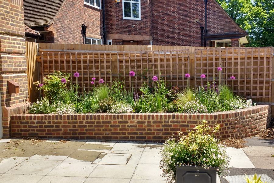 Community Church garden with Alliums, Erigeron, trellis and planters
