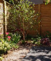 Minimalist Garden corner planting