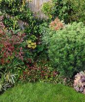 Medium garden design ideas October planting