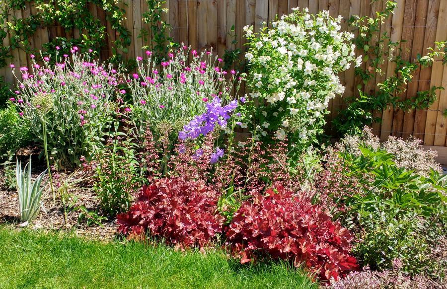 Colourful planting in a Medium garden design