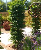 Contemporary Landscaping enhances this property