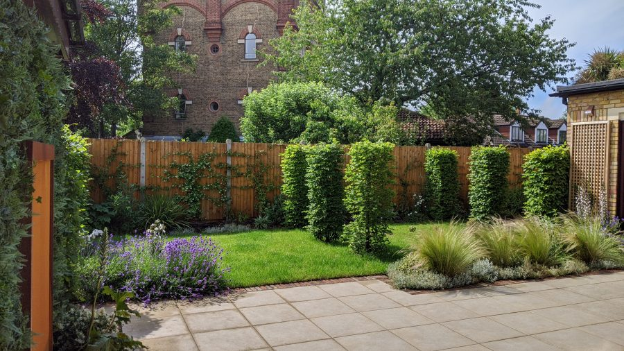 Contemporary Landscaping with Architectural planting
